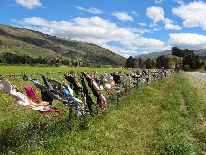Lạ lùng hàng rào áo ngực hút khách du lịch ở New Zealand - 7