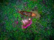 Du lịch - Hồ súng Việt Nam lọt top 12 bức ảnh chụp bằng flycam ấn tượng nhất thế giới