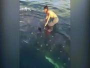 Phi thường - kỳ quặc - Từ thuyền nhảy xuống lưng cá mập lướt sóng vi vu trên biển
