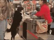 Ảnh động: Những chú chó khiến con người... bái phục