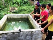 Tin tức trong ngày - Chết lặng thấy 2 con nhỏ chết đuối trong bể nước gia đình