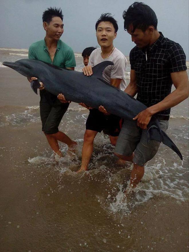 Trước bão, người dân giải cứu cá heo mắc cạn 1