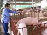 Thị trường - Tiêu dùng - Giá lợn tăng vọt khi Trung Quốc mở cửa