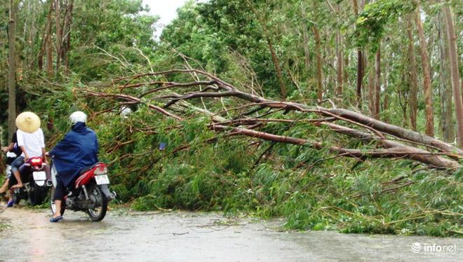 Ảnh: Hà Tĩnh, Nghệ An, Thanh Hóa tan hoang sau bão số 2 15