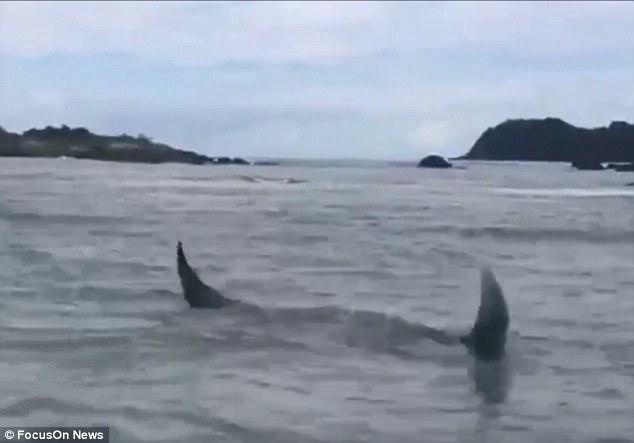 Brazil: Cá đuối nặng 1 tấn to như xe hơi mắc lưới ngư dân - ảnh 2