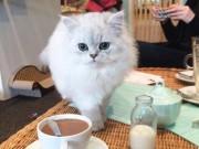 """Ghé thăm thành phố nơi những chú mèo đáng yêu  """" thống trị """""""