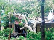 Tin tức trong ngày - Bão số 2 gây thiệt hại nghiêm trọng: Nhiều người chết, mất tích