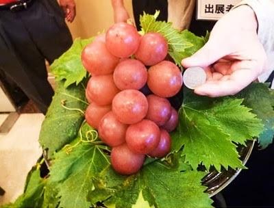 10 loại trái cây đắt nhất thế giới khiến bạn không thể thốt nên lời - 2