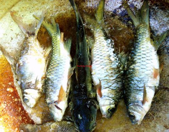 Ngon như cá suối chiên xù cuộn rau rừng - 3