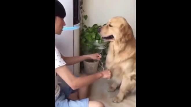 """Clip: Chú chó ngậm đắng nuốt cay vì trò """"đỏ đen"""""""