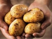 Sức khỏe đời sống - Hại sức khỏe vì ăn khoai tây sai cách