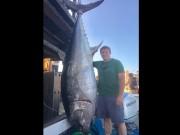 Mỹ: Câu được cá ngừ  khủng  3 tạ khi đang đọc sách