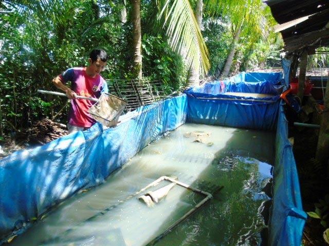 Cất bằng đại học vô tủ, kỹ sư trẻ lăn lộn với nghề nuôi lươn - 1