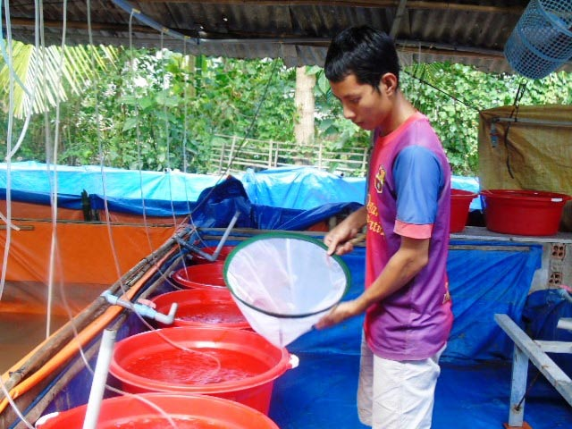 Cất bằng đại học vô tủ, kỹ sư trẻ lăn lộn với nghề nuôi lươn - 2