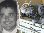 Mỹ: Chú vẹt cưng vạch trần tội ác vợ giết chồng dã man