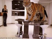 Phi thường - kỳ quặc - Những gia đình nuôi hổ, cá sấu như chó mèo trong nhà