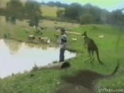 """Ảnh động: Những con vật  """" hổ báo """"  nhất thế giới động vật"""
