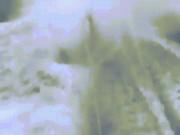 Thế giới - Cá mập đau đớn tột cùng vì bị buộc vào thuyền cao tốc
