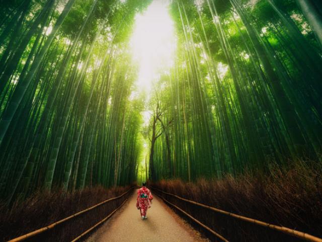 Có một ngôi làng xanh mát, trong lành và bình yên đến lạ ở Nhật Bản - 14