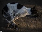 Thịt chó ngày càng được ưa thích ở nước 300 triệu dân này