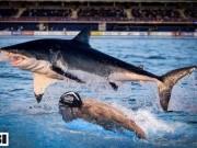 Phelps đua cá mập là trò hề, xem  Ma tốc độ  mới hấp dẫn