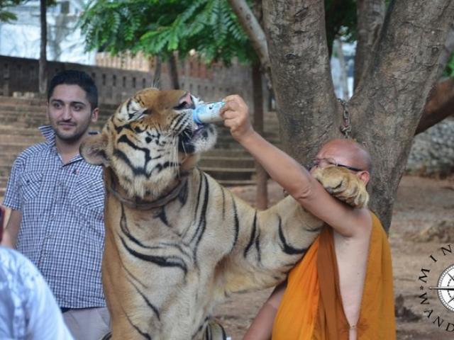 Hổ dữ nhảy qua hàng rào, đánh nhau với chó nhà ở Mỹ - 3