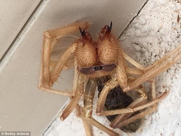Tá hỏa phát hiện nhện khổng lồ lai bọ cạp - 1