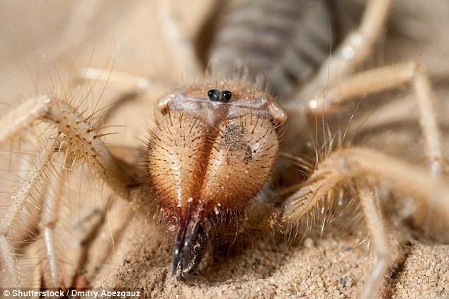 Tá hỏa phát hiện nhện khổng lồ lai bọ cạp - 2