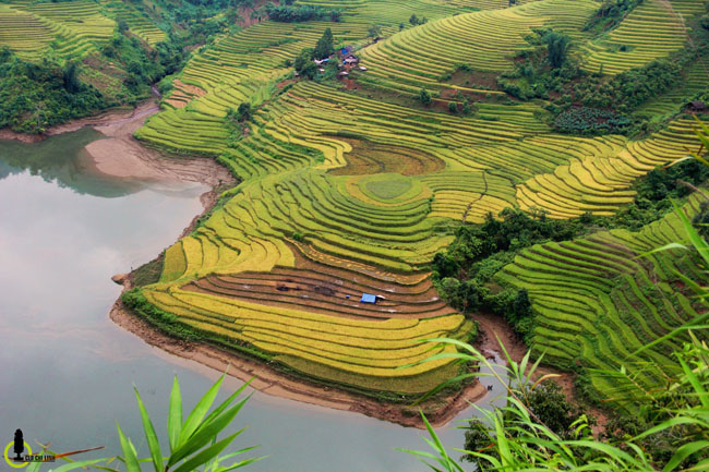 Lạc lối trong thung lũng lúa chín tráng lệ nhất Lào Cai - 2