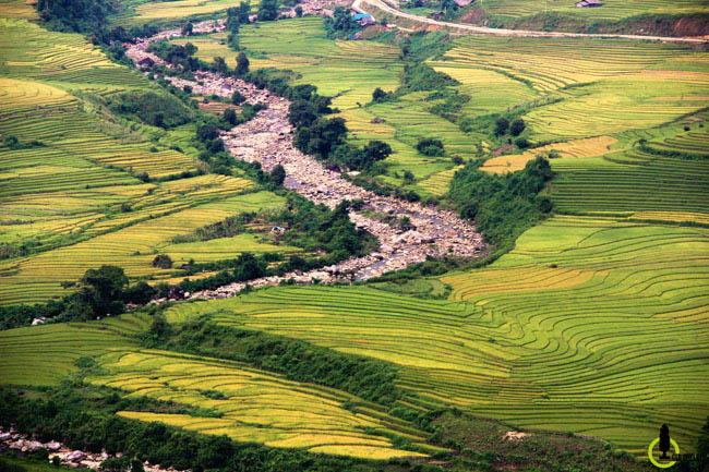 Lạc lối trong thung lũng lúa chín tráng lệ nhất Lào Cai - 3