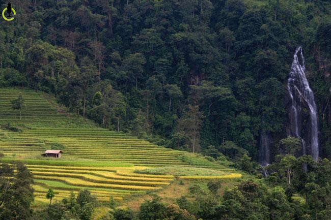 Lạc lối trong thung lũng lúa chín tráng lệ nhất Lào Cai - 9