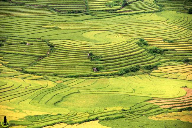 Lạc lối trong thung lũng lúa chín tráng lệ nhất Lào Cai - 8
