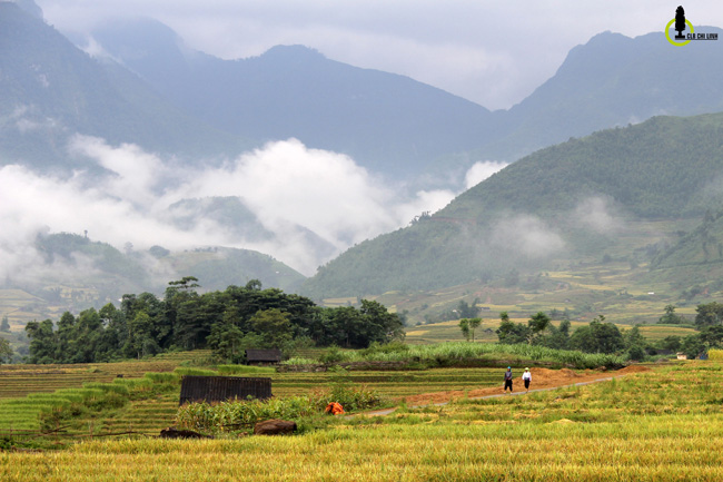 Lạc lối trong thung lũng lúa chín tráng lệ nhất Lào Cai - 11