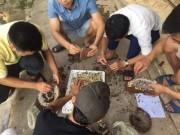 Thị trường - Tiêu dùng - Nghệ An: Dân đổ xô bắt ong đất bán cho thương lái Trung Quốc