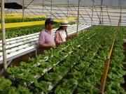 """Thị trường - Tiêu dùng - Bỏ làm giám đốc về trồng rau-quyết định """"khùng"""" cho thu nhập """"khủng"""""""