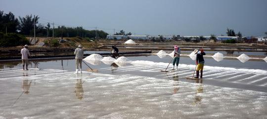 Muối Ninh Thuận được giá nhưng mất mùa - 1