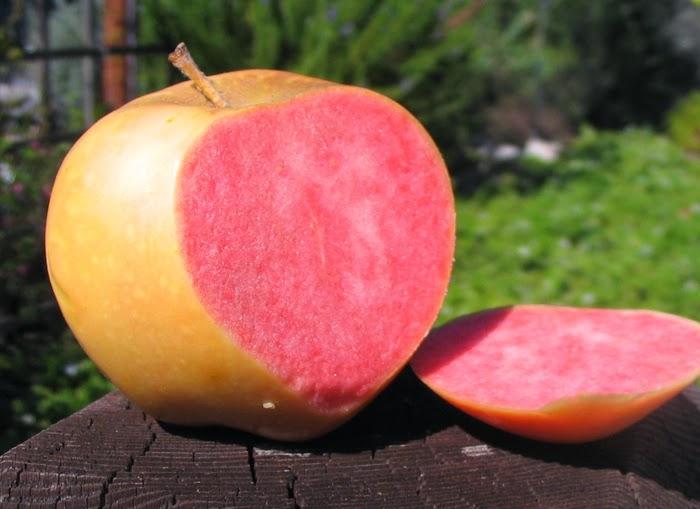 """Mê mẩn loại táo Mỹ lạ """"xanh vỏ - hồng lòng"""" siêu dễ thương - 6"""