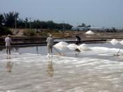 Thị trường - Tiêu dùng - Muối Ninh Thuận được giá nhưng mất mùa