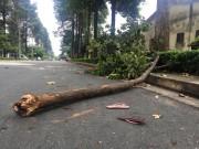 """Tin tức trong ngày - Hoàn cảnh bi đát của nữ công nhân bị nhánh cây """"trên trời"""" đập trúng"""