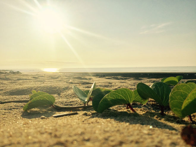 """Gần Hà Nội có một """"hoang đảo Robinson"""" tuyệt đẹp và bình yên đến lạ - 17"""