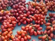 Thị trường - Tiêu dùng - Cây dại ra quả đỏ đẹp mê hồn, trẻ ăn vui vẻ, phụ nữ da hồng hào