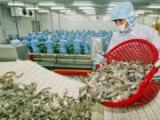 Thị trường - Tiêu dùng - Trung Quốc bất ngờ 'ăn' mạnh tôm Việt Nam