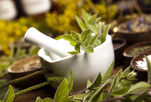 Chữa sốt xuất huyết hiệu quả nhờ bài thuốc từ cây cỏ - 1
