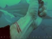 Thế giới - Thợ lặn Mỹ cắt tay trước đàn cá mập xem có bị xé xác