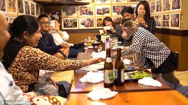 Khỉ làm việc như người ở nhà hàng Nhật Bản - ảnh 1