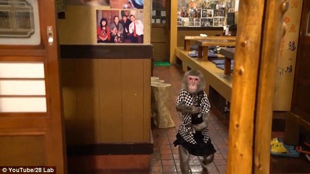 Khỉ làm việc như người ở nhà hàng Nhật Bản - ảnh 2