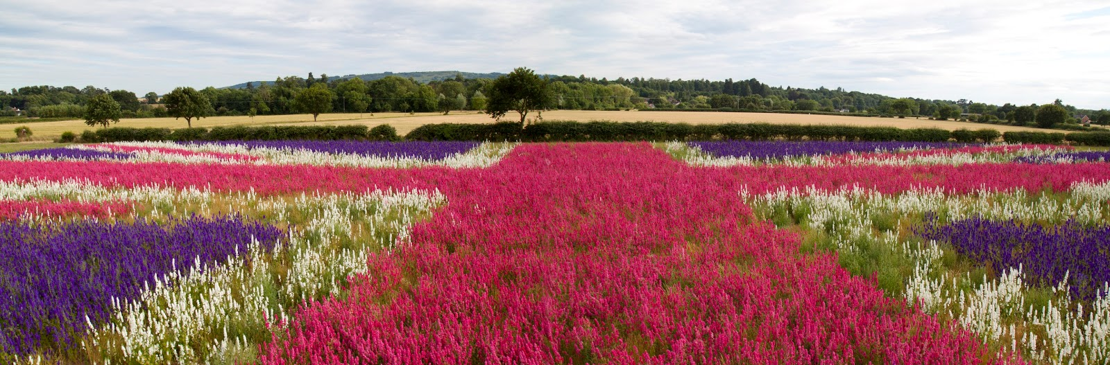 Ngỡ ngàng vẻ đẹp thiên đường hoa mùa hè chỉ mở cửa 7 ngày mỗi năm - ảnh 3