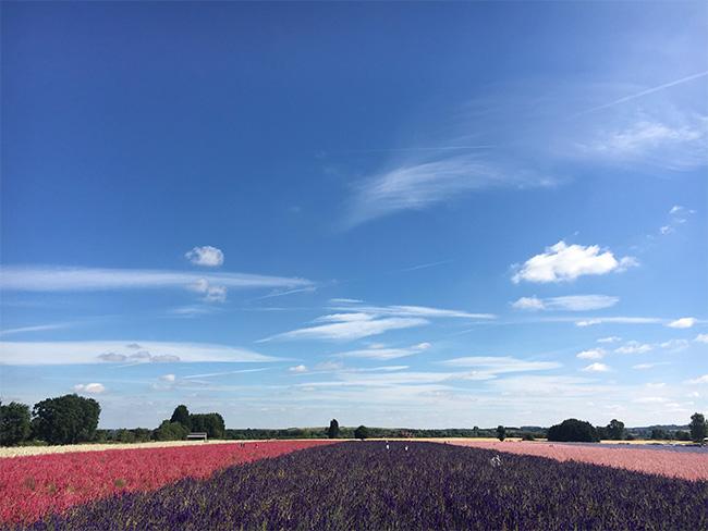 Ngỡ ngàng vẻ đẹp thiên đường hoa mùa hè chỉ mở cửa 7 ngày mỗi năm - ảnh 1