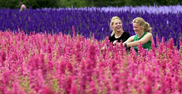 Ngỡ ngàng vẻ đẹp thiên đường hoa mùa hè chỉ mở cửa 7 ngày mỗi năm - ảnh 2