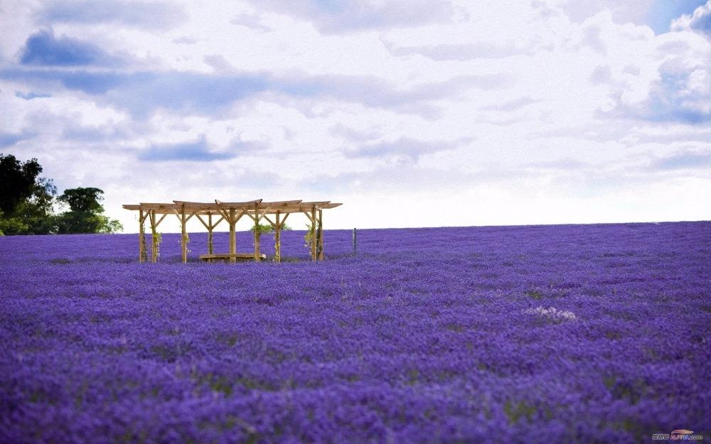 Ngỡ ngàng vẻ đẹp thiên đường hoa mùa hè chỉ mở cửa 7 ngày mỗi năm - ảnh 7